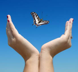butterfly leaving hand