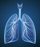 lungs - quitting smoking