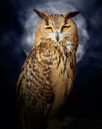 shamanic spirit animal guide owl
